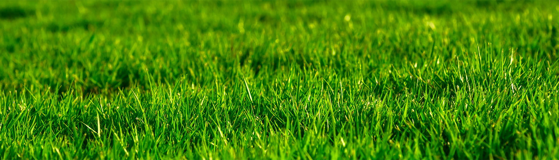 Grass Seed Mixtures